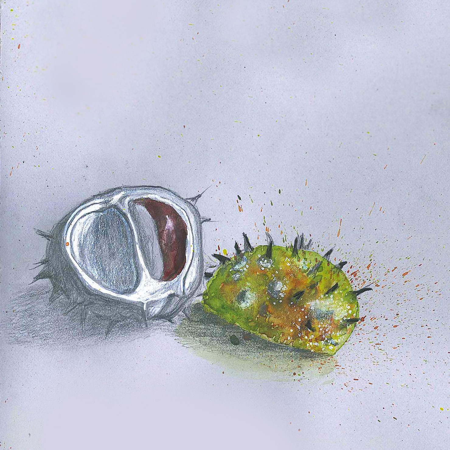 Image of a chestnut by Flavia Parone